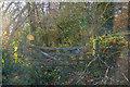 SS5022 : Huntshaw : Woodland by Lewis Clarke