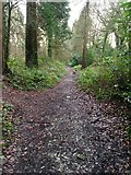 SX5857 : Permitted woodland path, Walks Brake by jeff collins