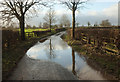 SE3261 : Puddle, Warren Lane by Derek Harper