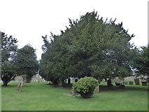 SP6019 : Cherwell  Churches Christmas chug through (55) by Basher Eyre