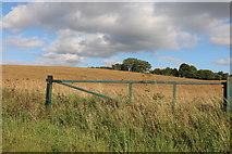TL3936 : Field by Bogmoor Road near Barkway by David Howard