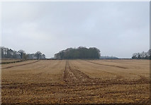 SE9746 : Stubble field west of the B1248 by JThomas