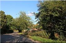 TL4327 : The Street, Furneux Pelham by David Howard