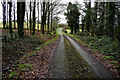 H4764 : Road through the forest at Mullaghmore by Kenneth  Allen