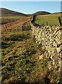 NT9715 : Wall near Hartside by Derek Harper