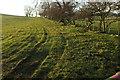 NU0315 : Pasture, Branton Buildings by Derek Harper