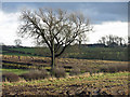 NZ3020 : Farmland east of Ketton Hall by Mike Quinn
