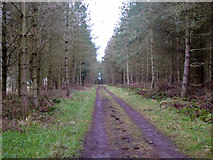 NT7329 : Track, Bowmont Forest by Robin Webster