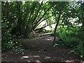 SP3165 : Glade on the riverbank, Milverton Riverside, Royal Leamington Spa by Robin Stott