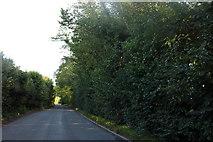 TL4326 : Albury Road, Furneaux Pelham by David Howard