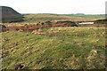 NU2521 : Heathland near Dunstanburgh Castle by Derek Harper