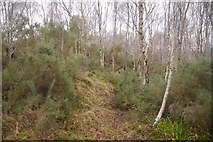 NH6750 : Path, Creag a' Chaisteil by Richard Webb