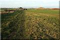 NU2422 : Coast path past Dunstanburgh Castle Golf Course by Derek Harper