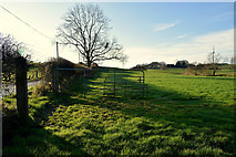 H5070 : Open gate to field, Donaghanie by Kenneth  Allen