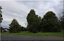 SU2560 : East Grafton Green by David Howard