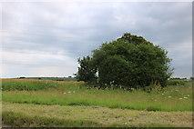 SU2760 : Field by the A338 near Marten by David Howard