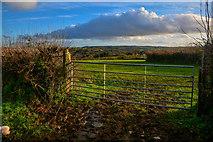 ST2112 : Churchstanton : Grassy Field & Gate by Lewis Clarke