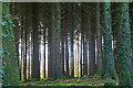 ST2213 : Churchstanton : Woodland by Lewis Clarke