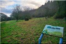 ST2213 : Churchstanton : Grassy Field by Lewis Clarke