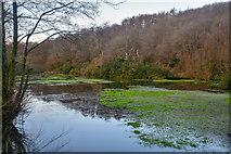 ST2213 : Churchstanton : Top Lake by Lewis Clarke