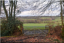 ST2113 : Churchstanton : Grassy Field & Gate by Lewis Clarke