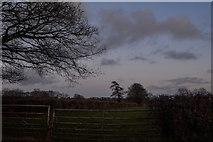 ST2114 : Churchstanton : Grassy Field & Gate by Lewis Clarke