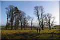 SD5771 : Stand of old trees, Storrs Hall by Ian Taylor