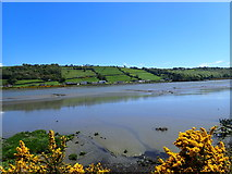 J1022 : A view East across the Newry River towards the A2 (Warrenpoint Road) by Eric Jones