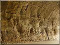 SK5639 : Park Tunnel, Nottingham - geology by Stephen Craven