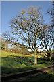 SX8954 : Trees, Lupton Park by Derek Harper