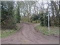 TL4330 : Bridleway, Brent Pelham by Malc McDonald