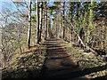NZ1255 : The Derwent Walk at Byerside Wood by Clive Nicholson