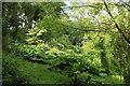 SX9150 : Woodland above Pudcombe Cove by Derek Harper