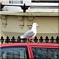 TQ3203 : Brighton - seagull on car by Ian Cunliffe