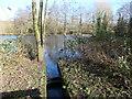 SJ3173 : Outlet from Woodland Pool, RSPB Burton Mere Wetlands by Christine Johnstone