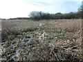 SJ3073 : Inner marsh, RSPB Burton Mere Wetlands by Christine Johnstone