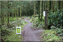 NX4465 : Diversion for the White & Yellow Trails by Billy McCrorie