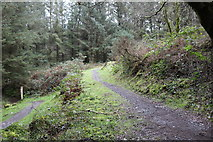 NX4464 : Forest Trails, Kirroughtree by Billy McCrorie