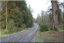 NX4465 : Trail to Little Bruntis Loch by Billy McCrorie