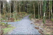 NX4465 : Kirroughtree Lade Trail by Billy McCrorie