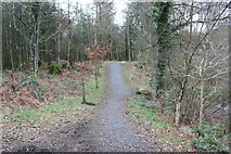 NX4465 : White Trail in Kirroughtree Forest by Billy McCrorie