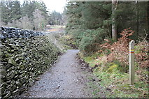 NX4465 : Forest Trail passing Bruntis Loch by Billy McCrorie