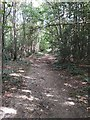 TQ6038 : Footpath through the Woods by John P Reeves