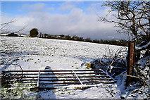 H5559 : A fallen gate, Garvaghy by Kenneth  Allen