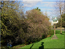 TL4856 : Cherry Hinton: February blossom and the village sign by John Sutton