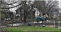 TQ2116 : Horses near Furners Lane by Ian Cunliffe