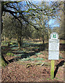 SU2882 : National Trust, Ashdown Park by Des Blenkinsopp
