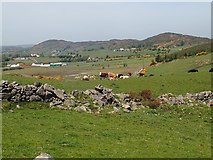 J1018 : Cattle grazing on marginal land in the SE section of the Ring of Gullion by Eric Jones