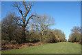 SU2882 : Vista through Middle Wood by Des Blenkinsopp