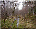 NH4938 : Flooded track, Boblainy Forest by Craig Wallace